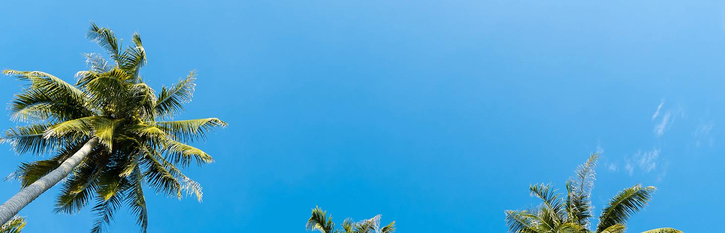Algemeen Palmbomen